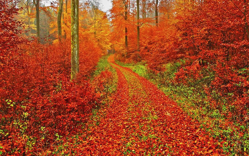 Picture of a path in the woods, the leaves are red and yellow during the fall season in Wyoming, MI
